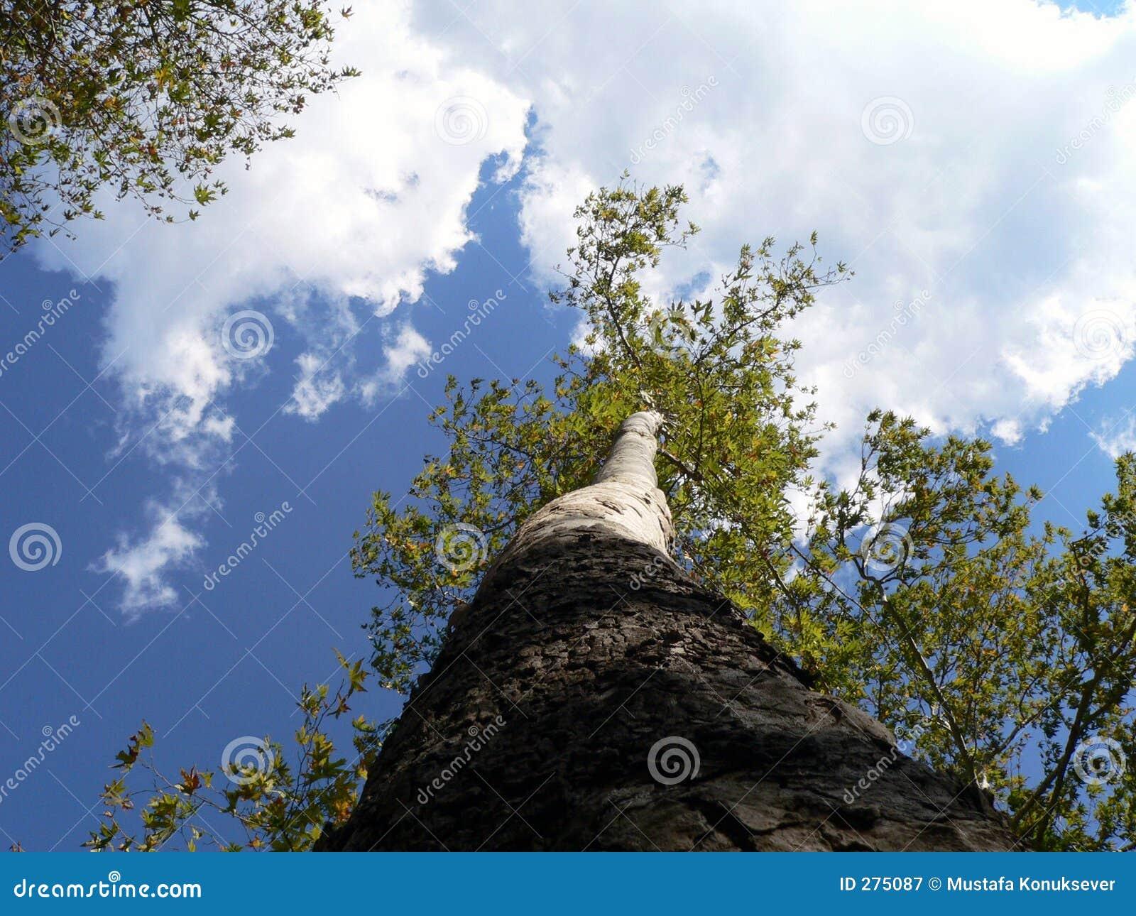 De boom en kon
