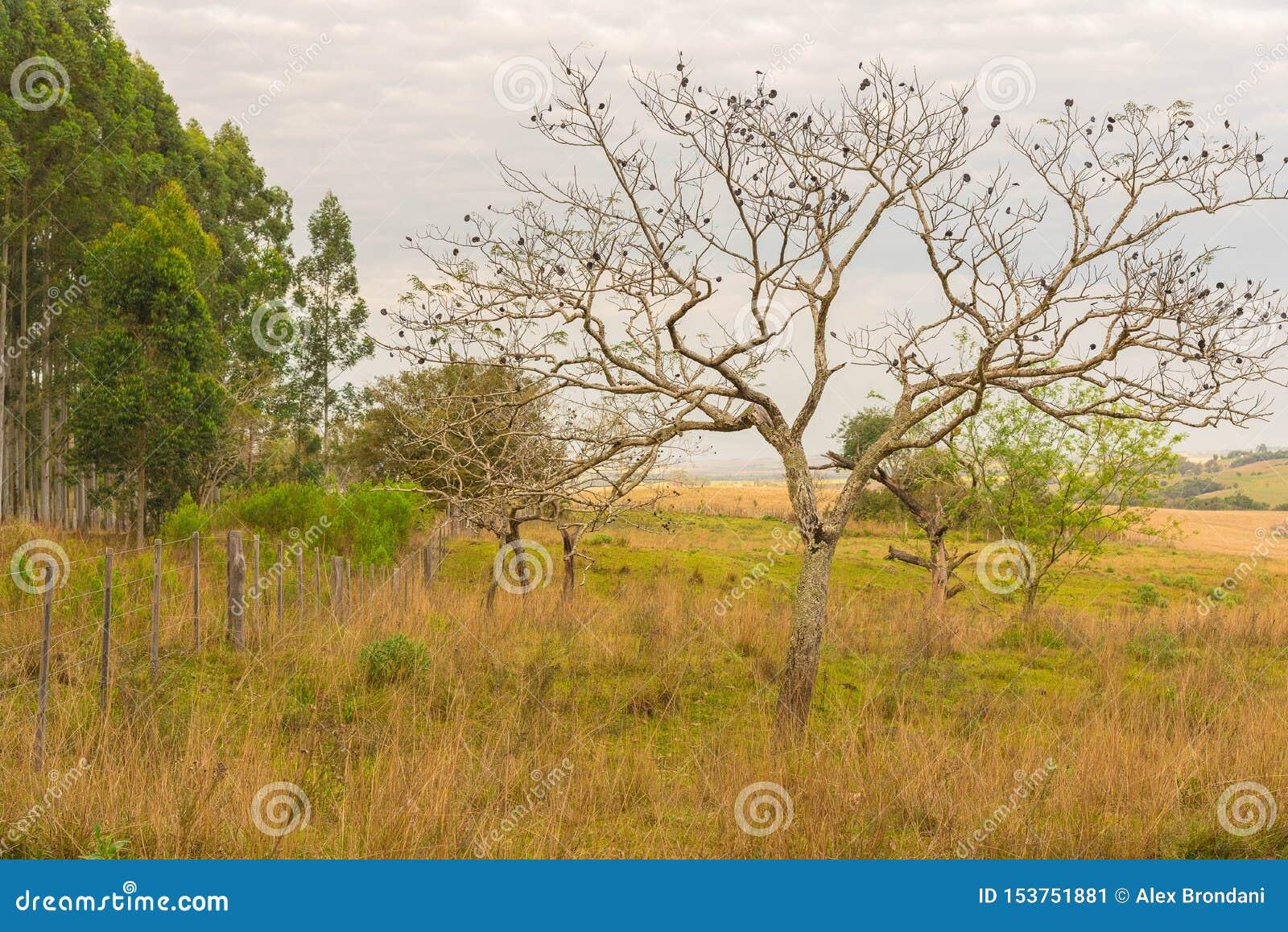 De boom met zijn donkere vruchten jpg