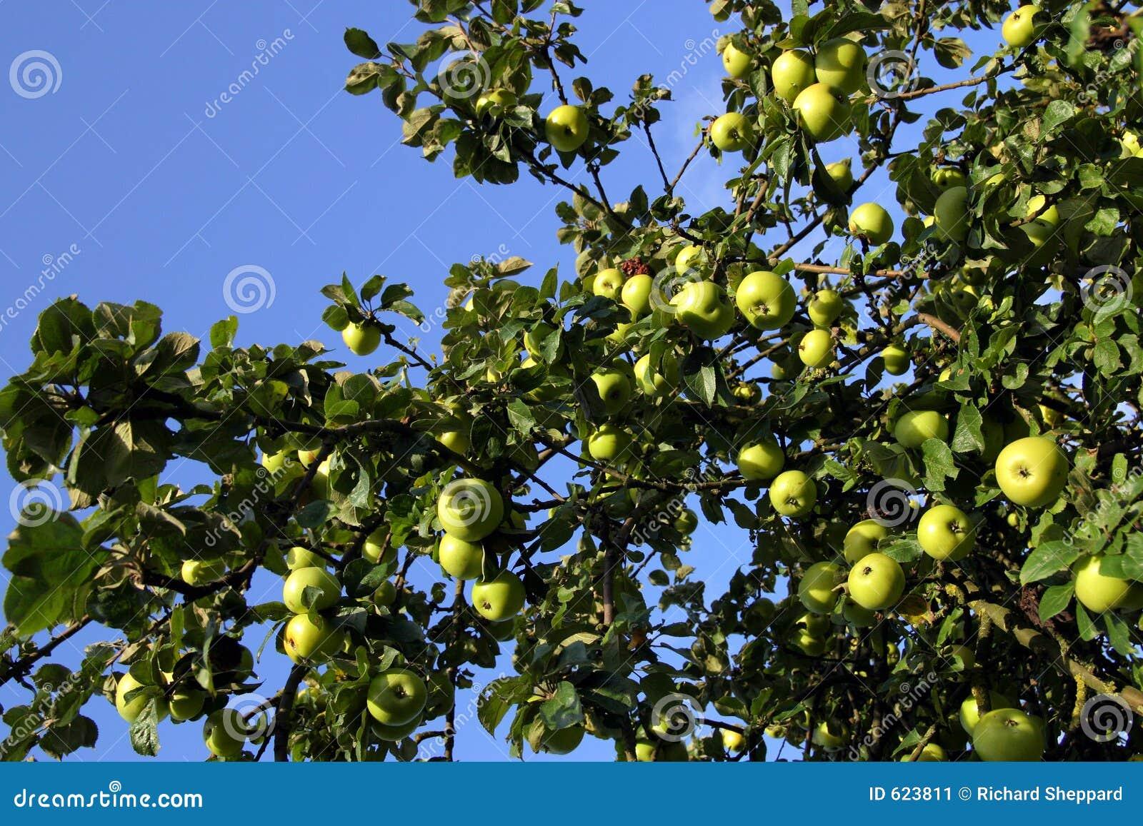 De boom van de appel