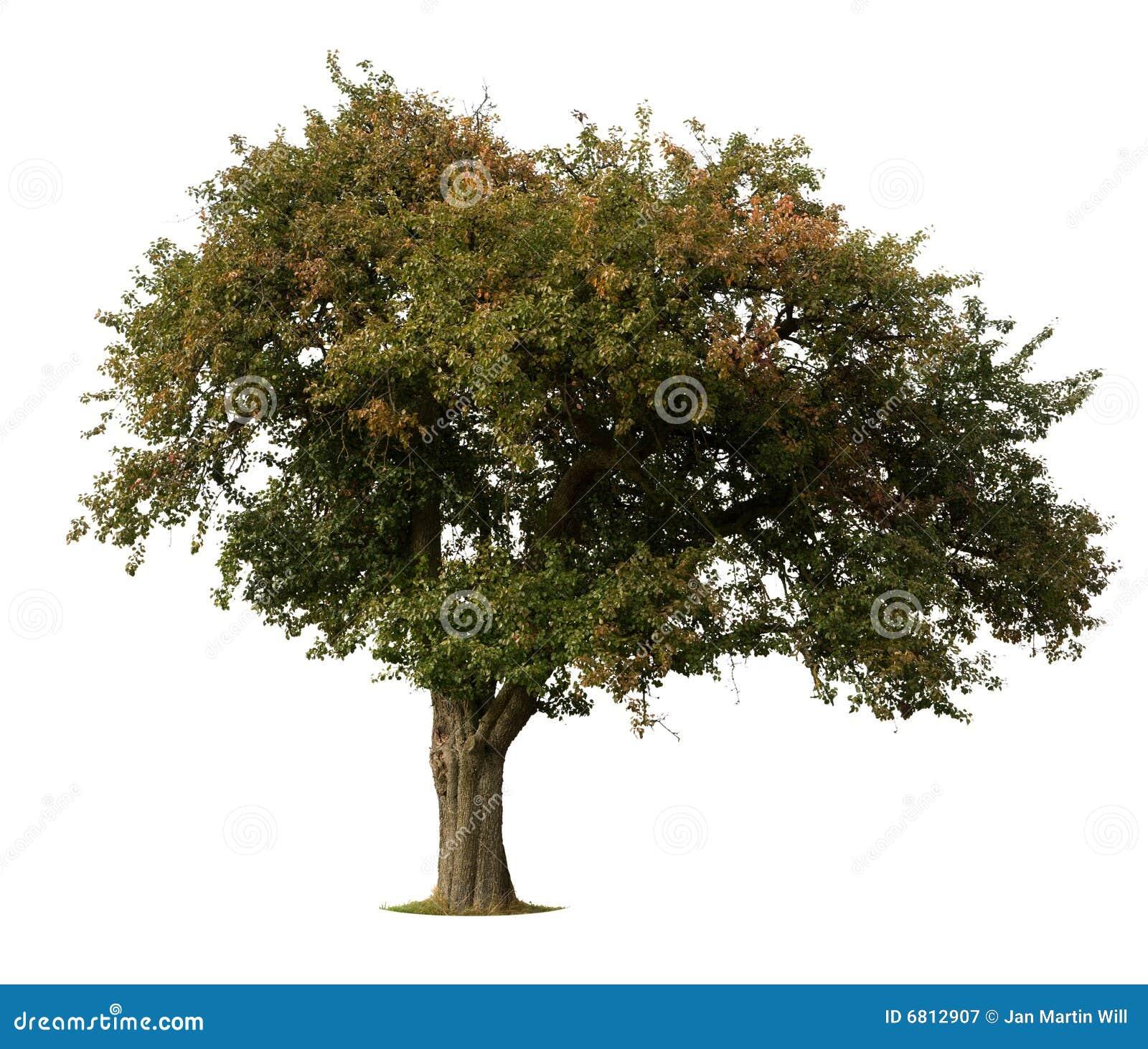 De boom van de appel die op wit wordt geïsoleerdl