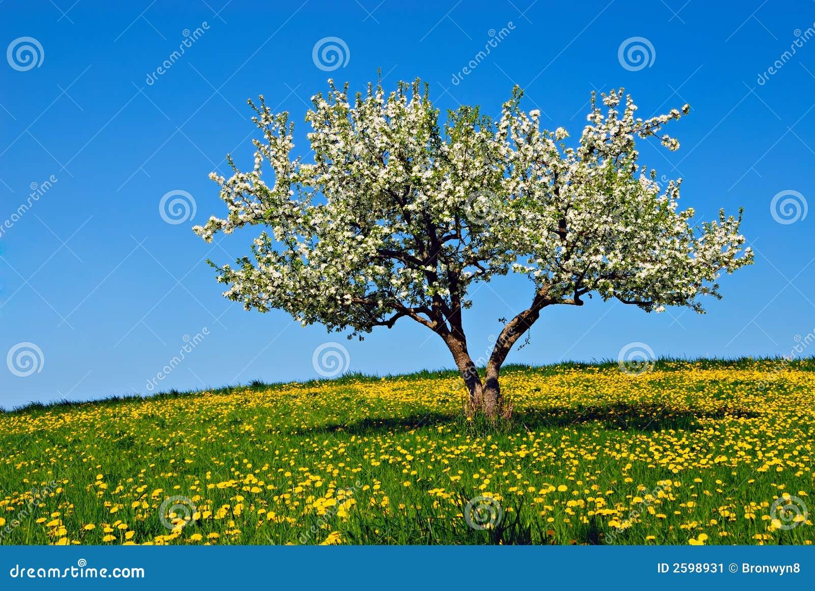De boom van de appel met bloesems