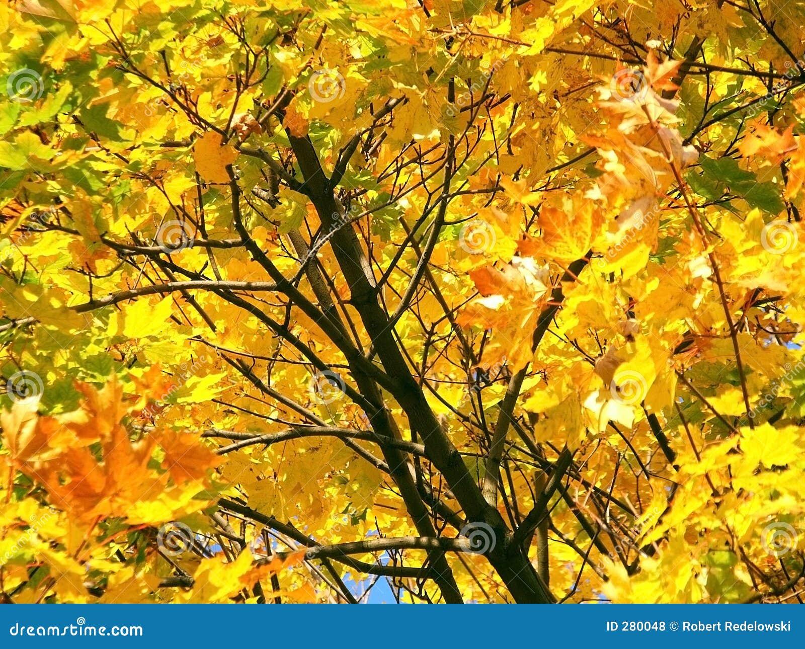 De Boom van de herfst