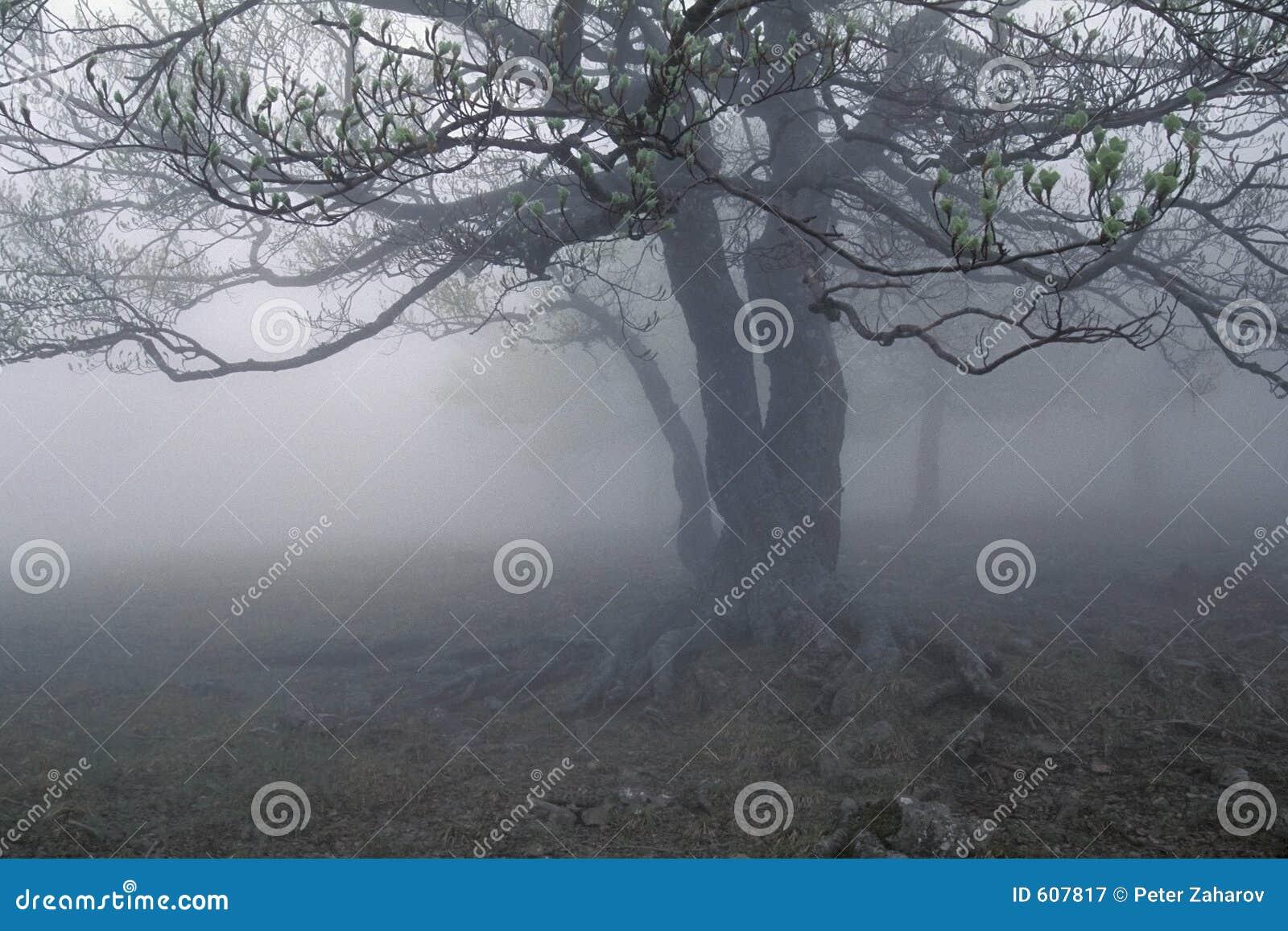De boom van de mist