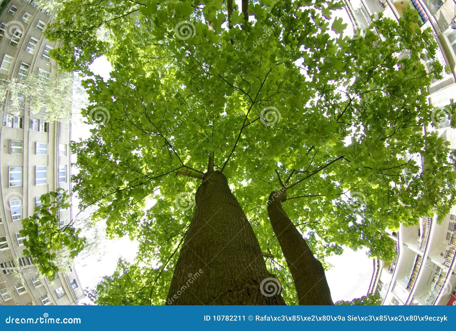De boom van de stad
