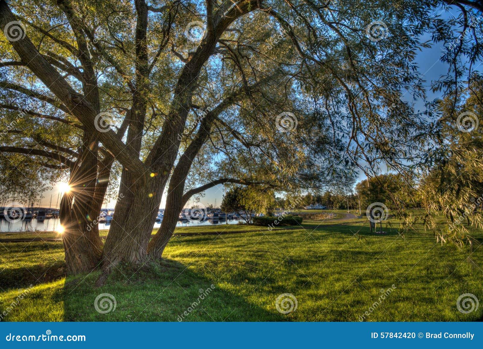 De boom van de zon stock foto afbeelding bestaande uit bomen 57842420 - Deksel van de boom ...