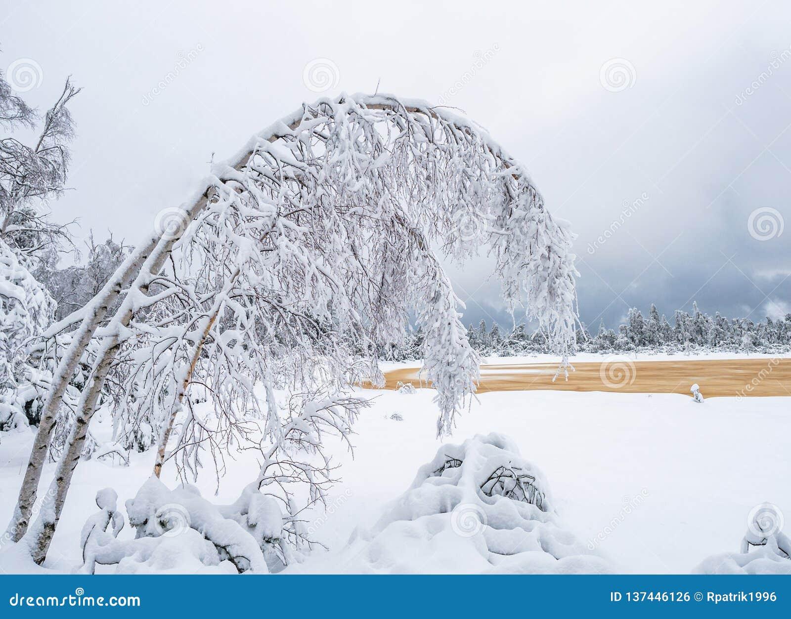 De boom van de Fibonacciwinter in het hoogland moore
