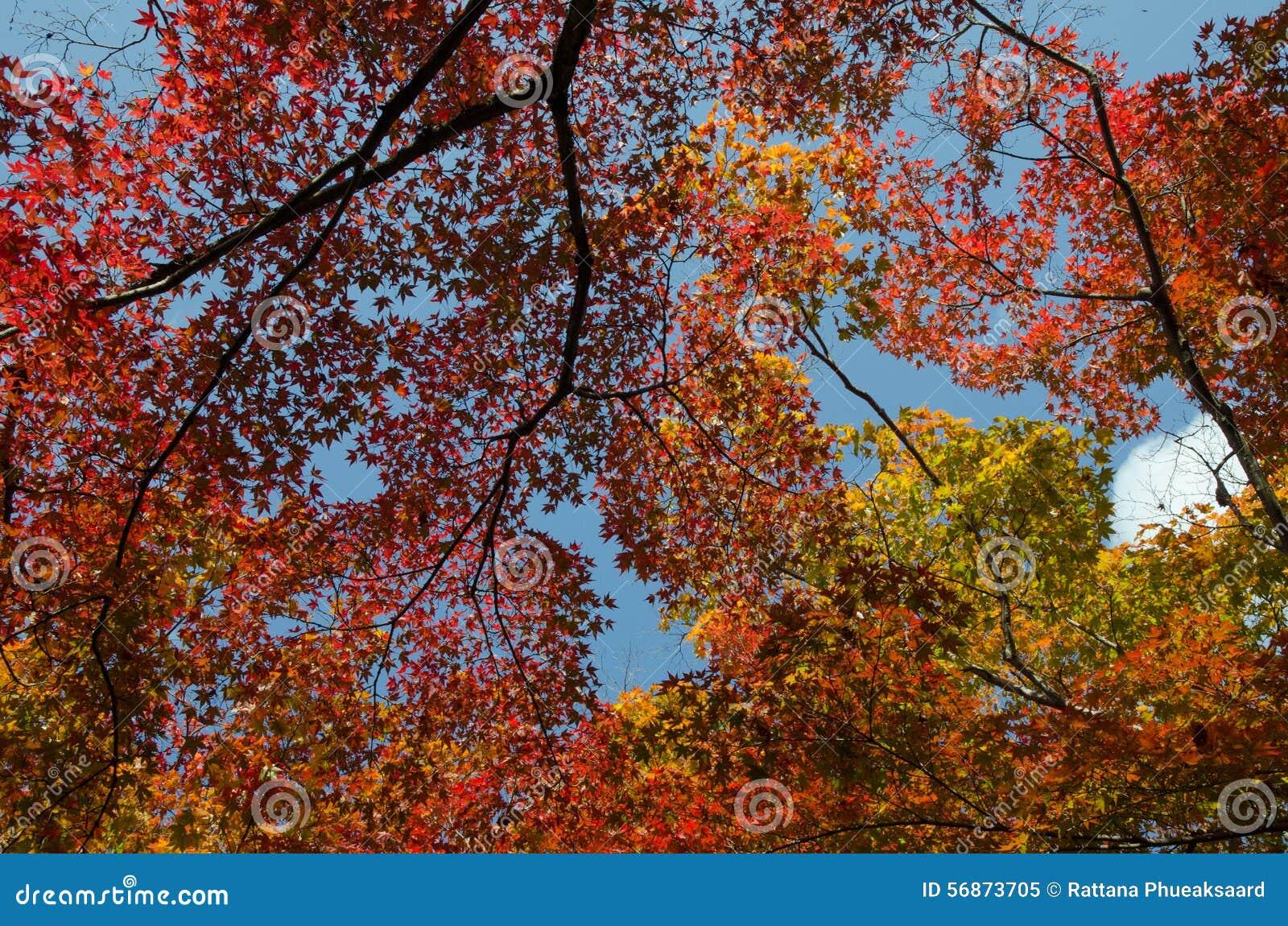 De boom van gebladertebladeren
