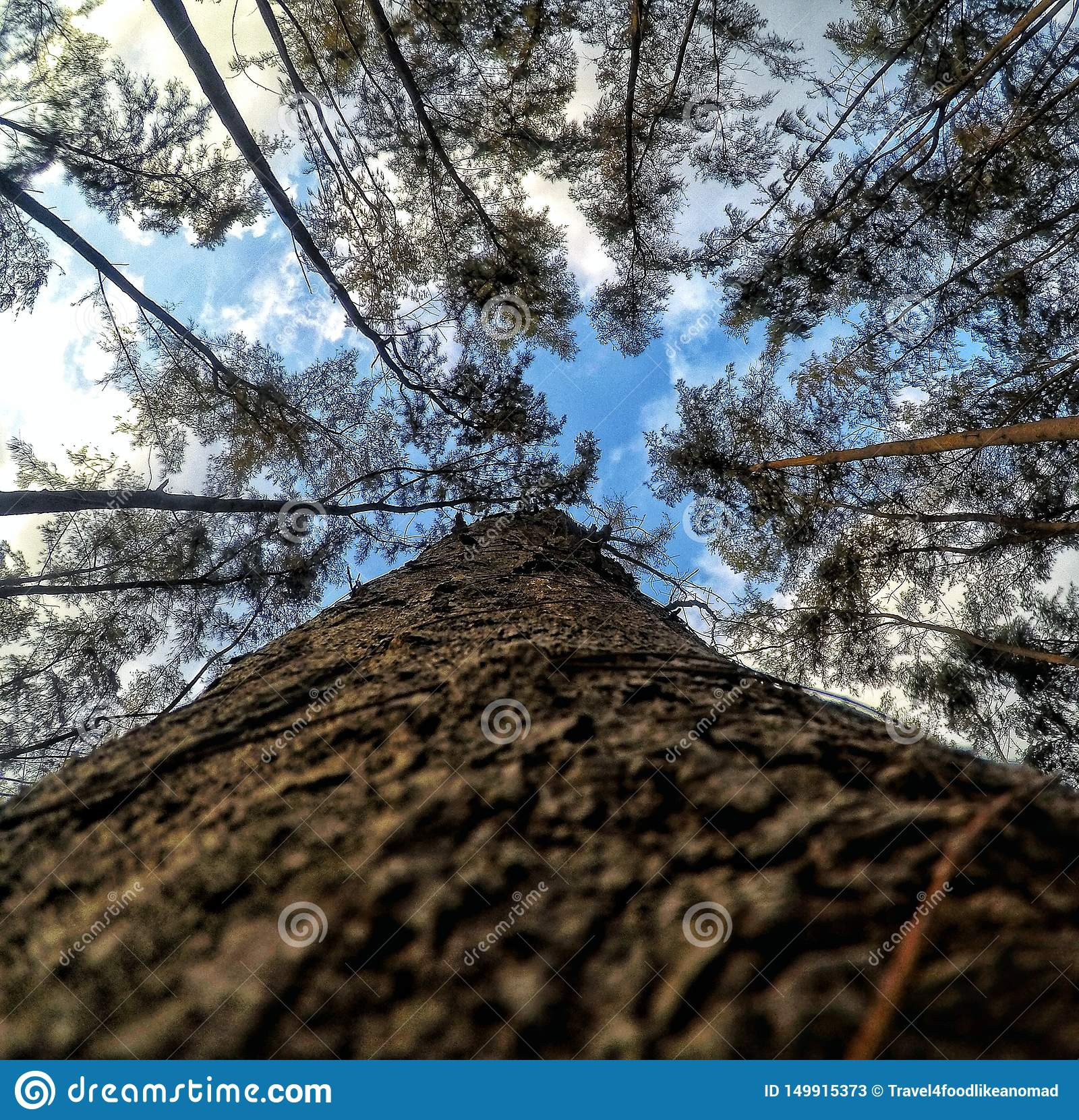 De boom van hoogten