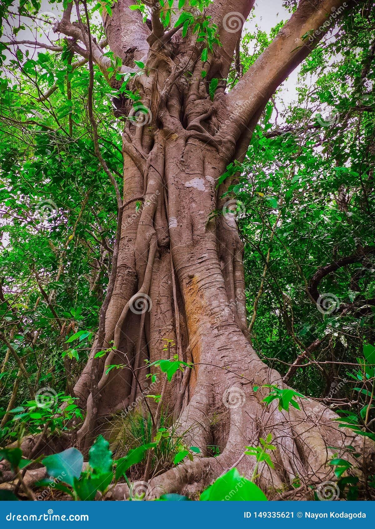 De boom van natuurlijke wijnstokken