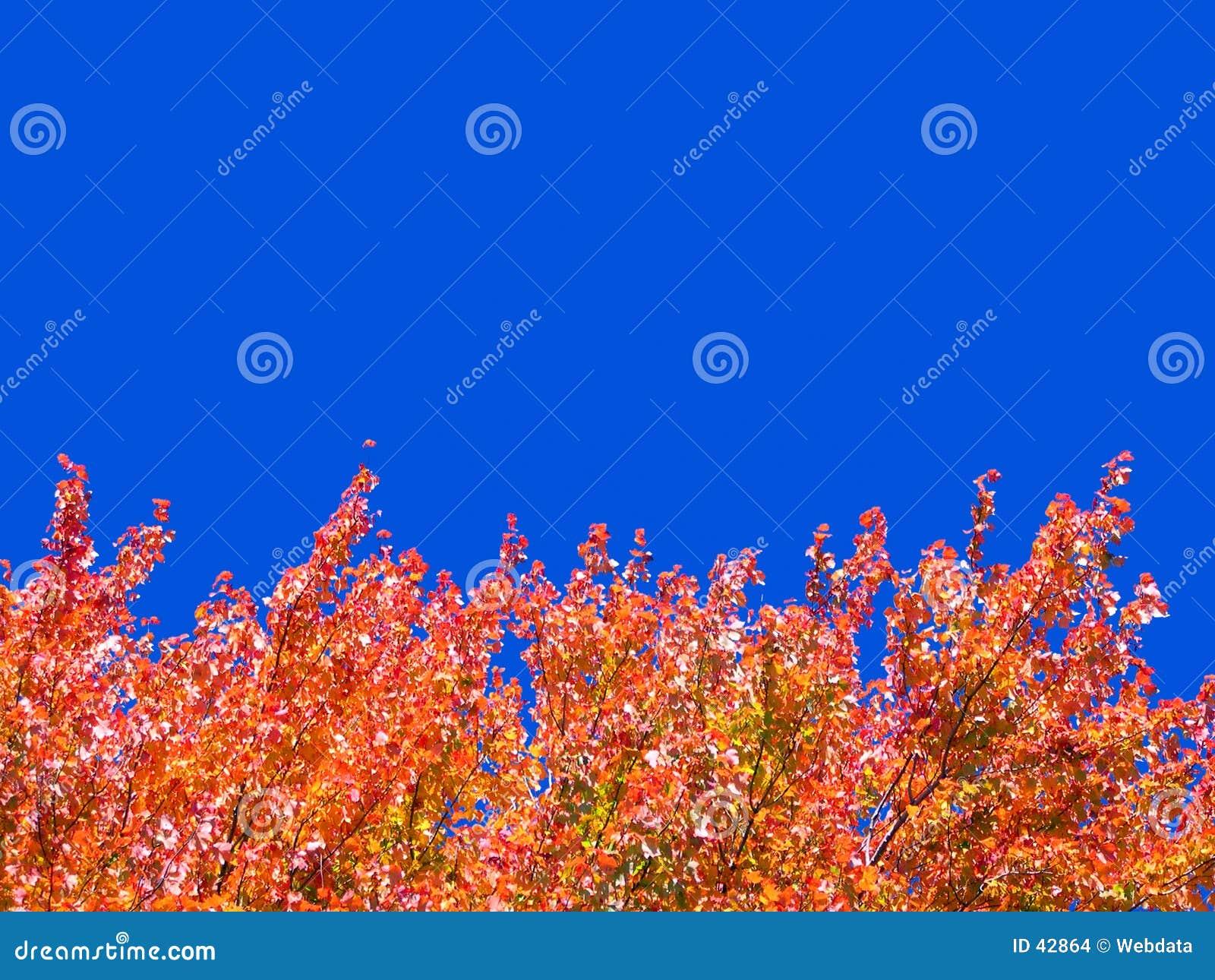 De boombovenkanten van de herfst