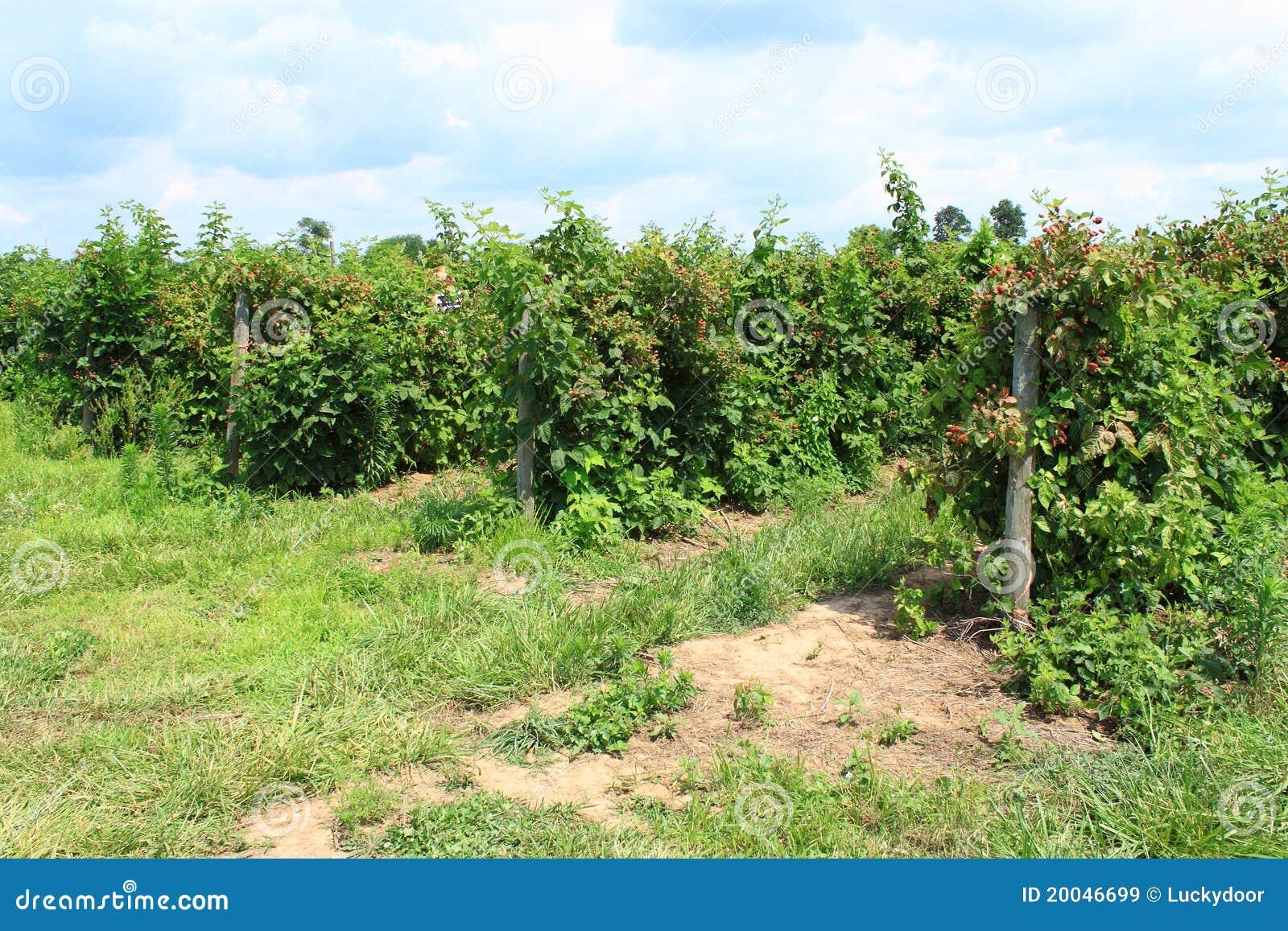 De Boomgaard van de bes