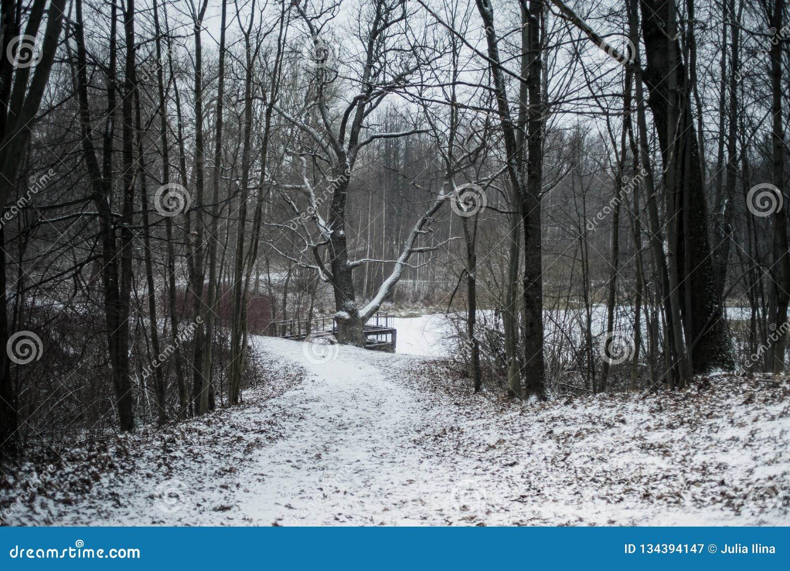 De boomsneeuw van de de winter bos koude dag
