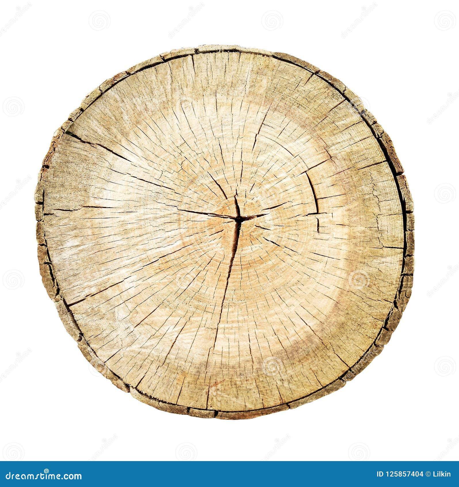 De boomstam van de boombesnoeiing met houten ringen