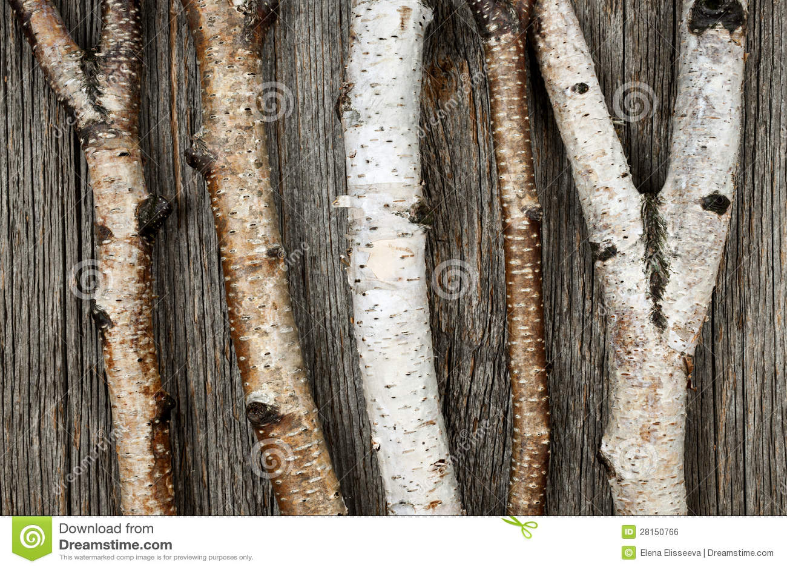 De boomstammen van de berk royalty vrije stock afbeelding for Boomstam decoratie