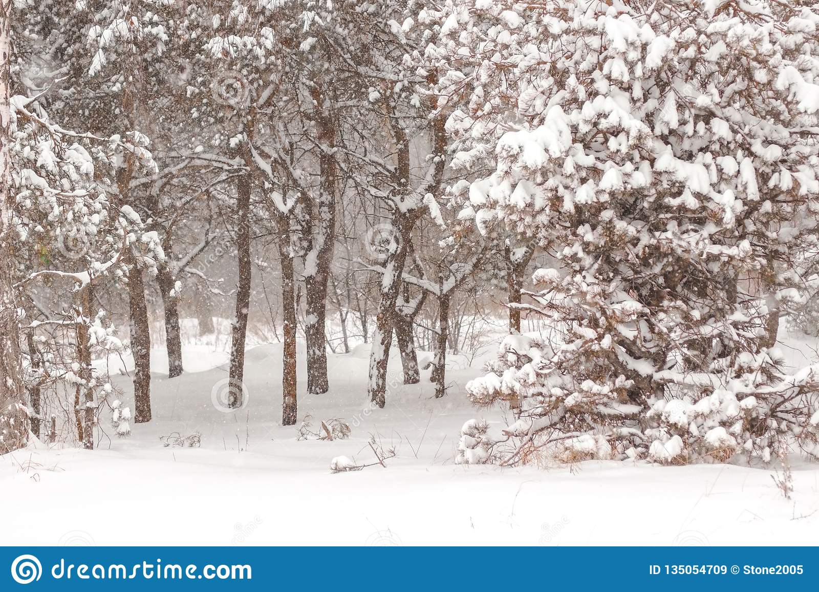 De bos, dalende sneeuw van de feewinter blur