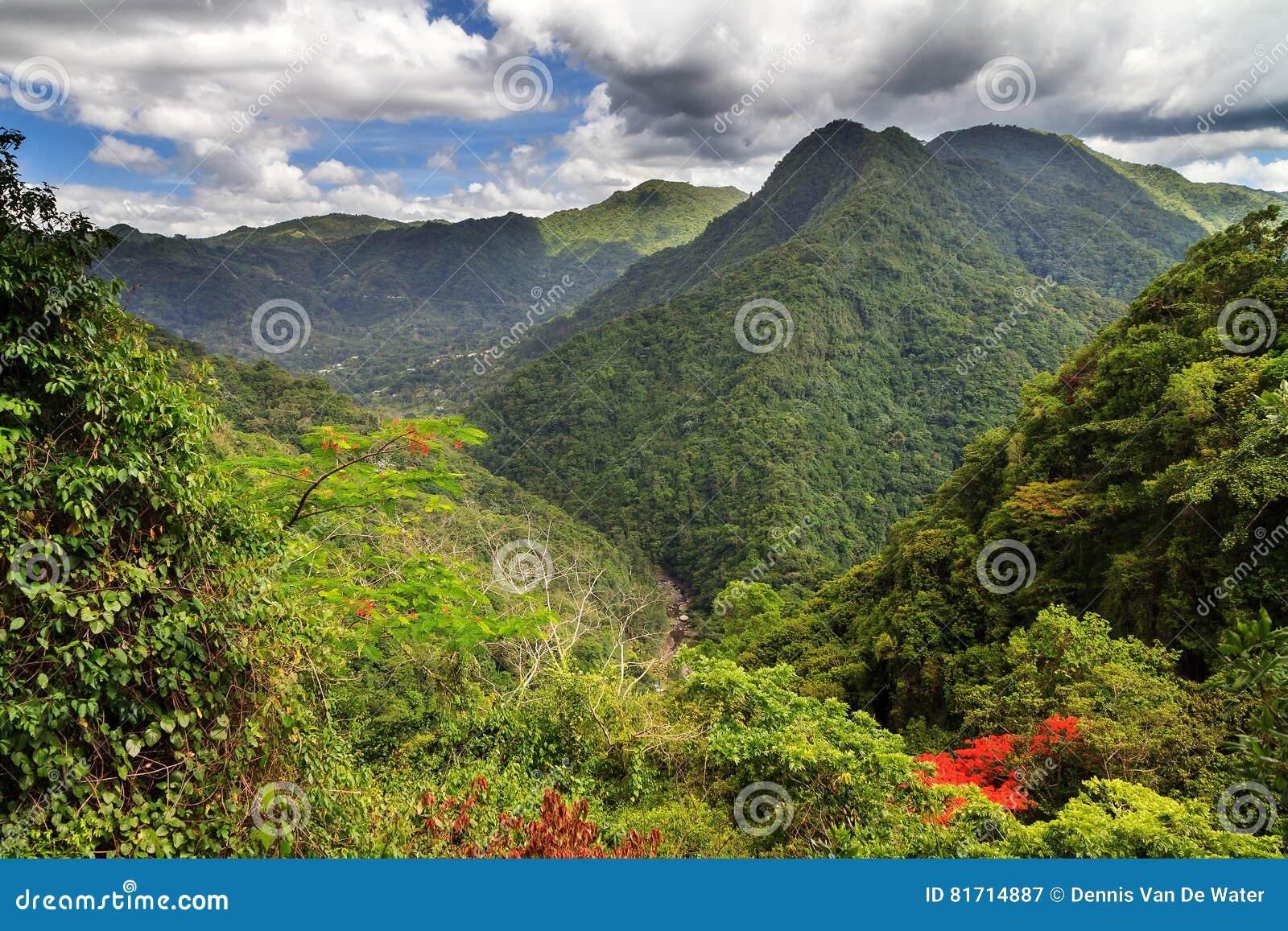 De bosheuvels van Puerto Rico