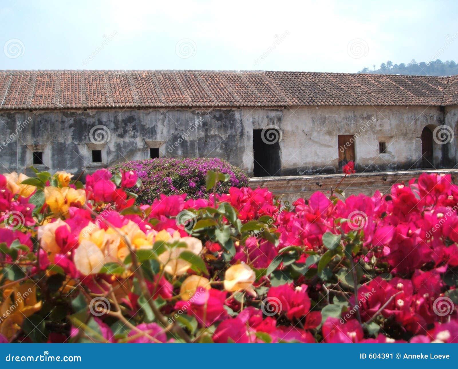 De bougainvillea van Capuchinas van Las
