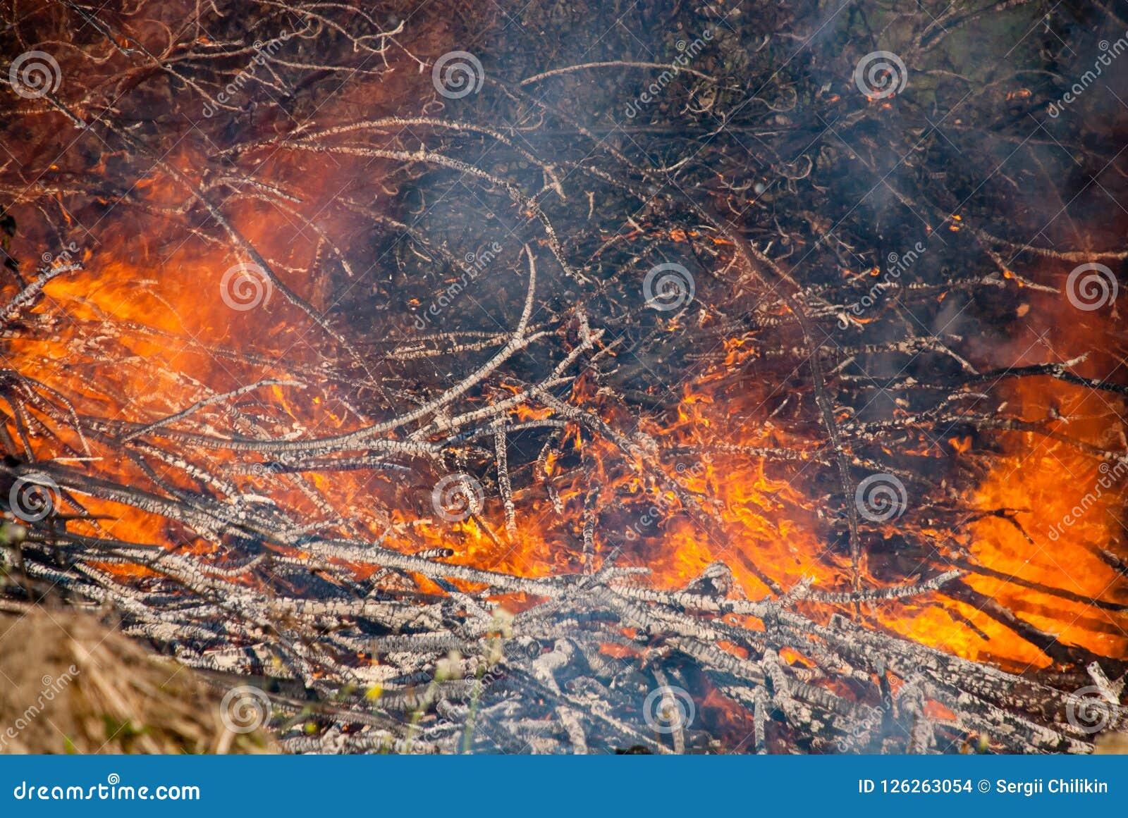 De brandwond van boomtakken