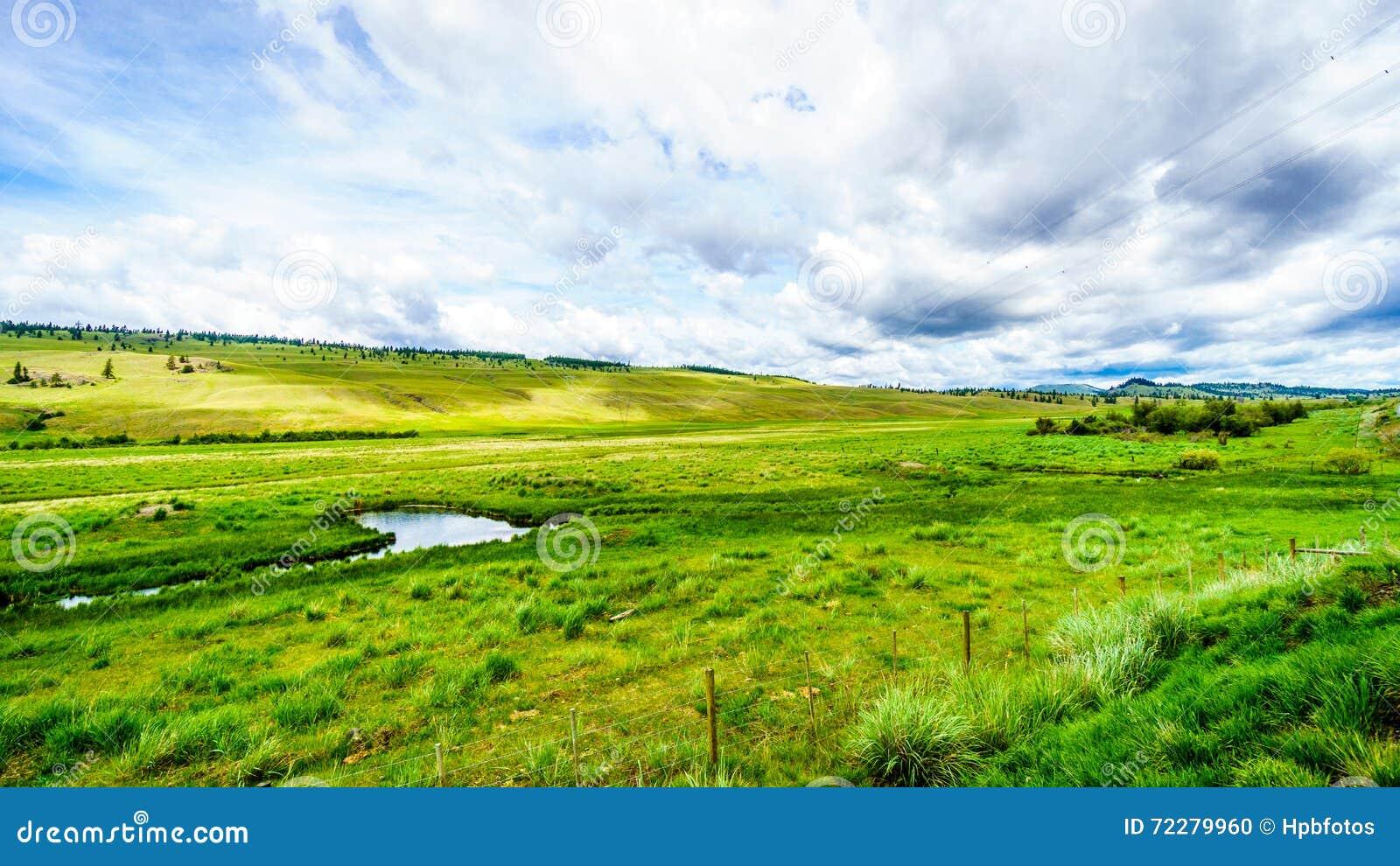 De brede open weiden en de rollende heuvels van Nicola Valley