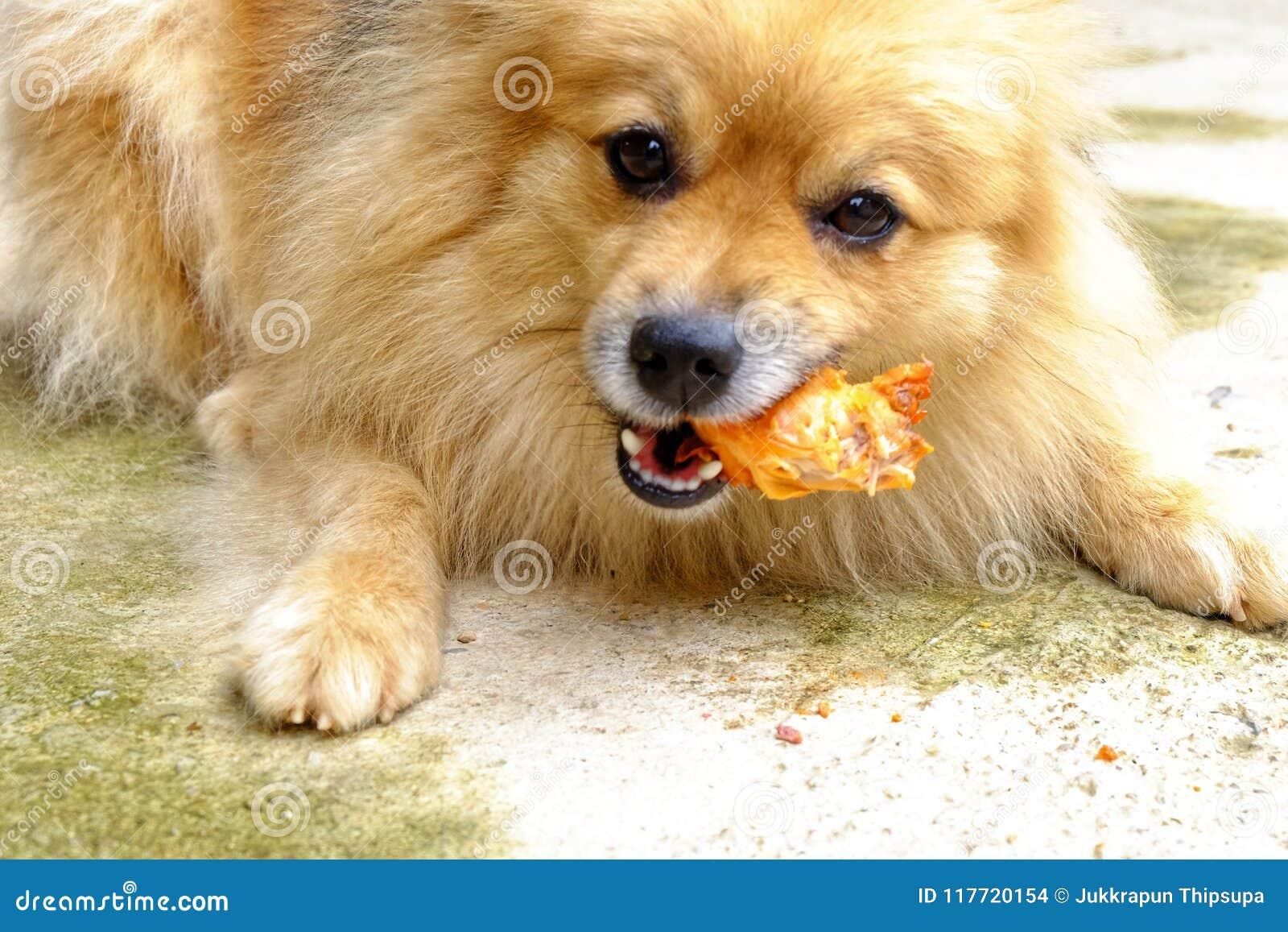 De bruine hond eet heerlijk kippenbeen op concreet F