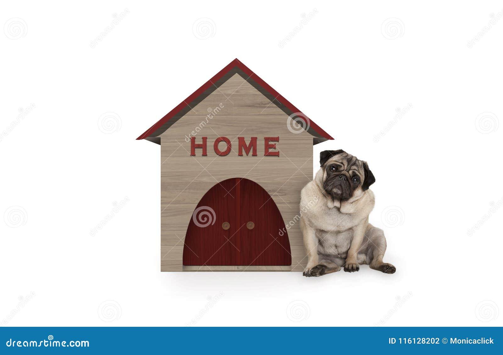 De brutale pug zitting van de puppyhond neer naast hondhuis met tekenhuis