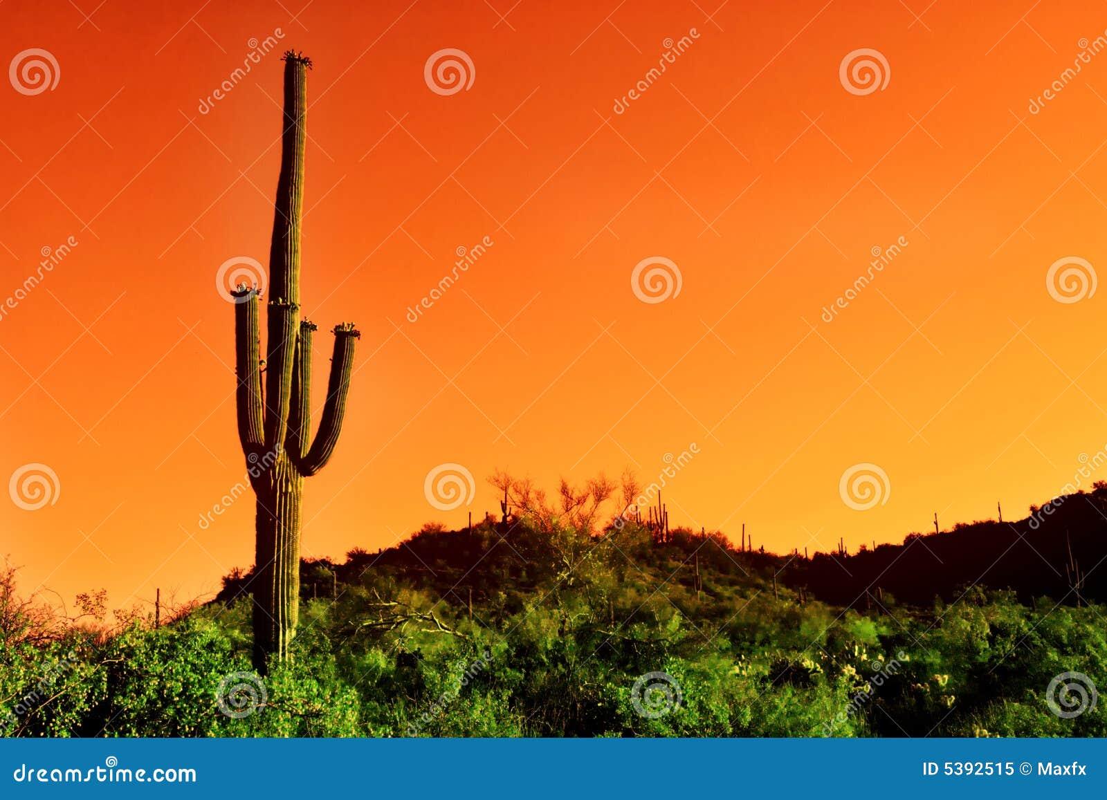 De cactus van Saguaro in infrared van de Woestijn Sonoma