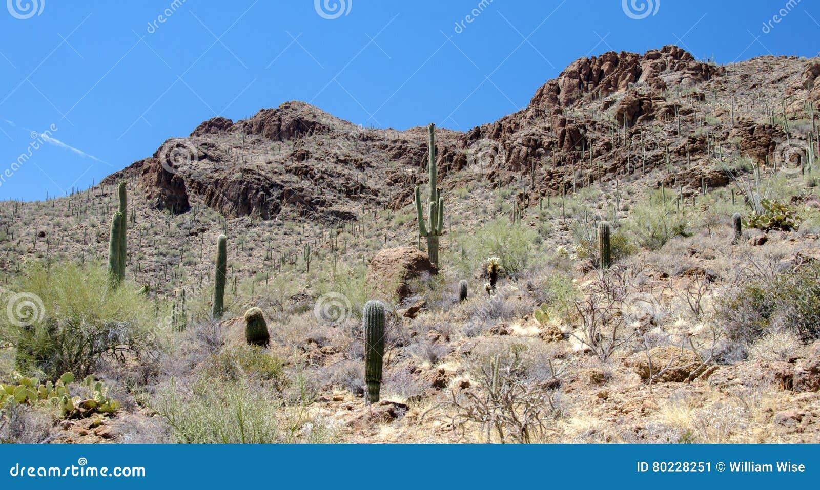 De Cactus van Tucson Arizona Saguaro van de poortenpas