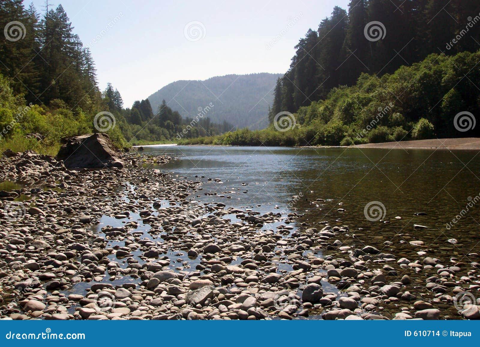 De Californische sequoia NP van de rivier