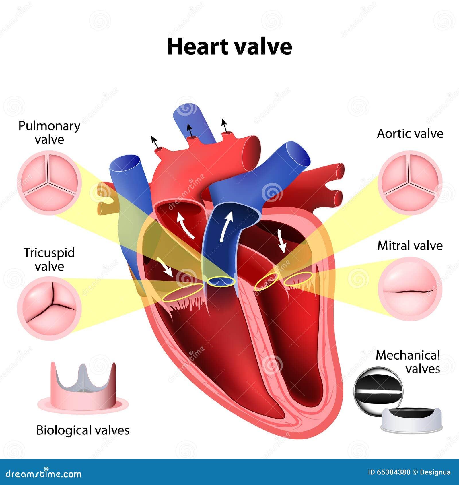 De chirurgie van de hartklep vector illustratie for Atrium coeur