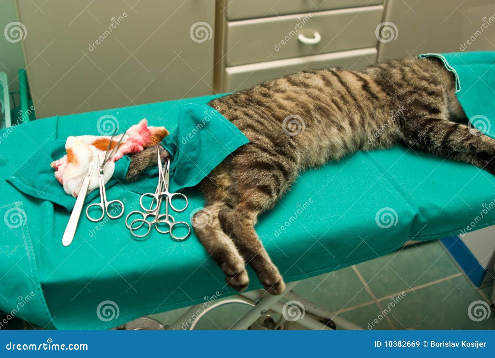De chirurgie van de kat