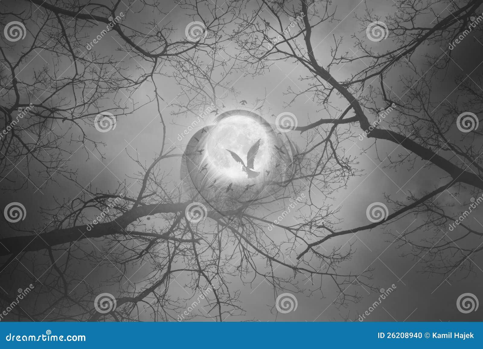 De cirkel van de de maanvogel van de mysticus