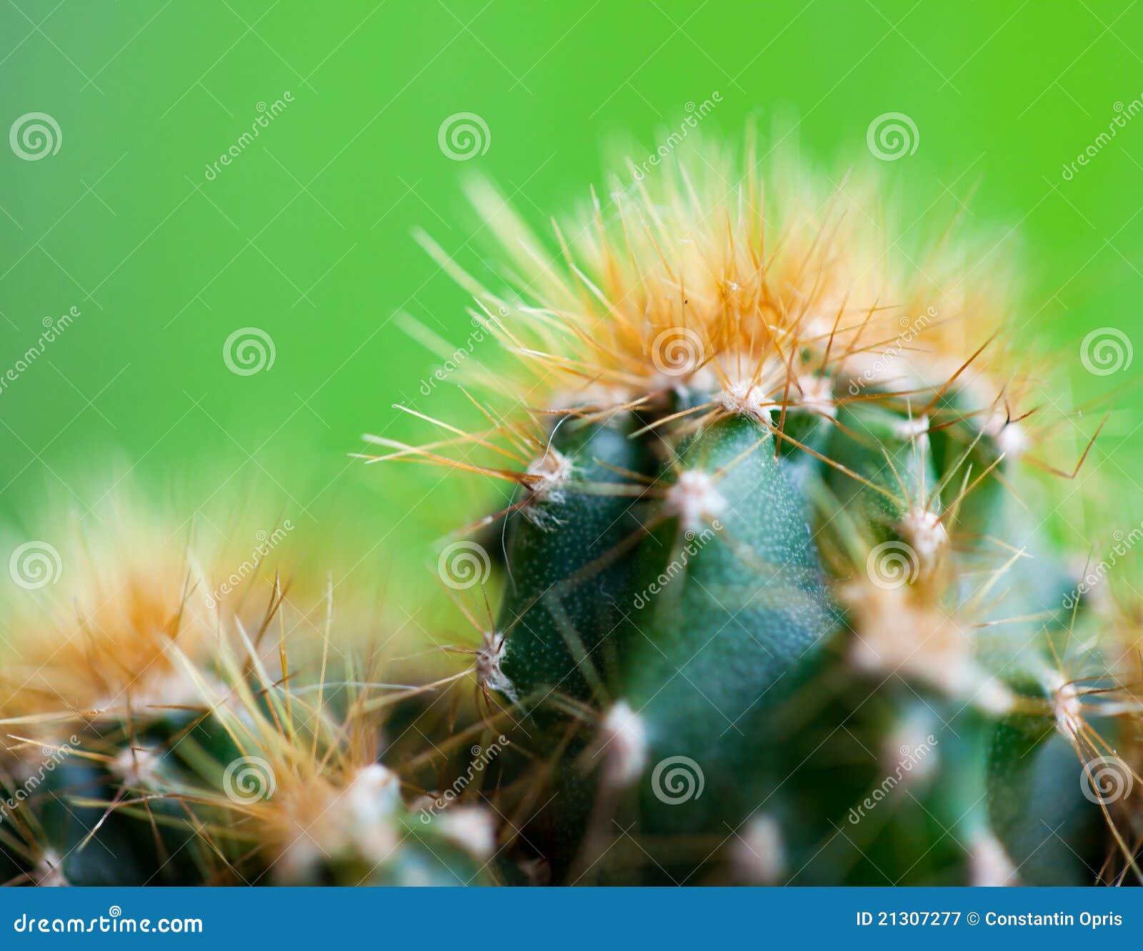 de close up van de cactus stock afbeelding afbeelding. Black Bedroom Furniture Sets. Home Design Ideas