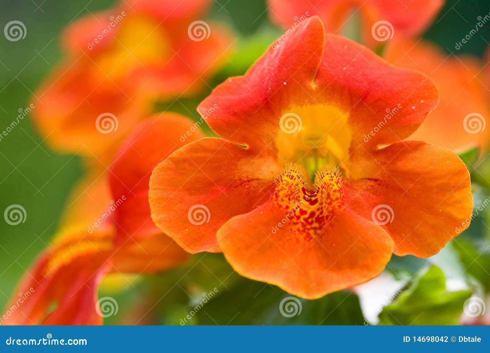 De close-up van de de bloemgroep van de aap