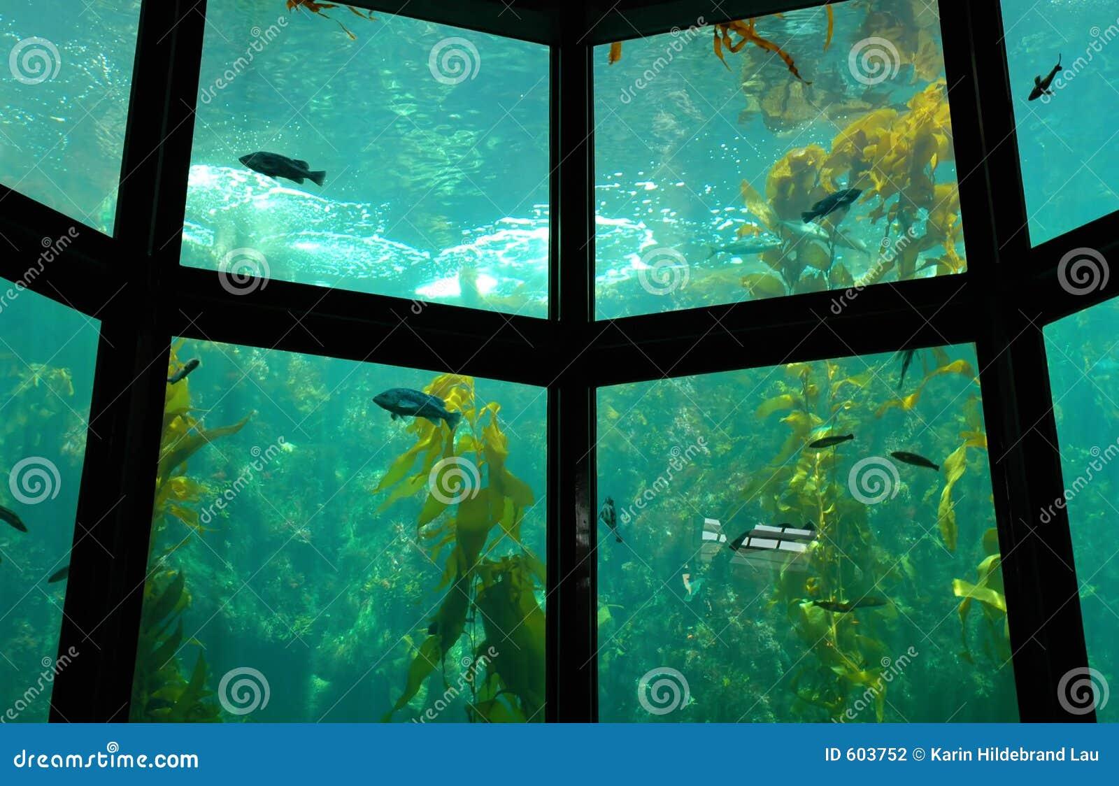 De Close-up van het aquarium