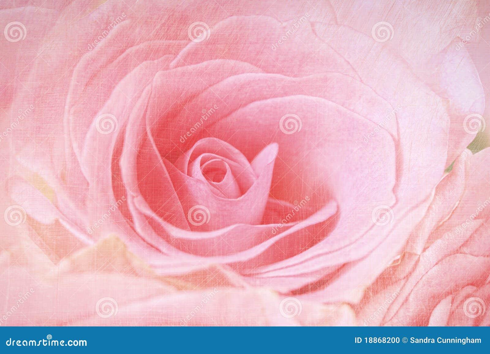 De close-up van roze nam toe