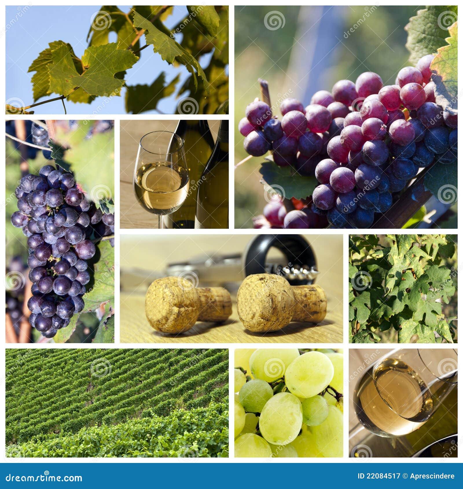 De collage van de wijn en van de wijngaard