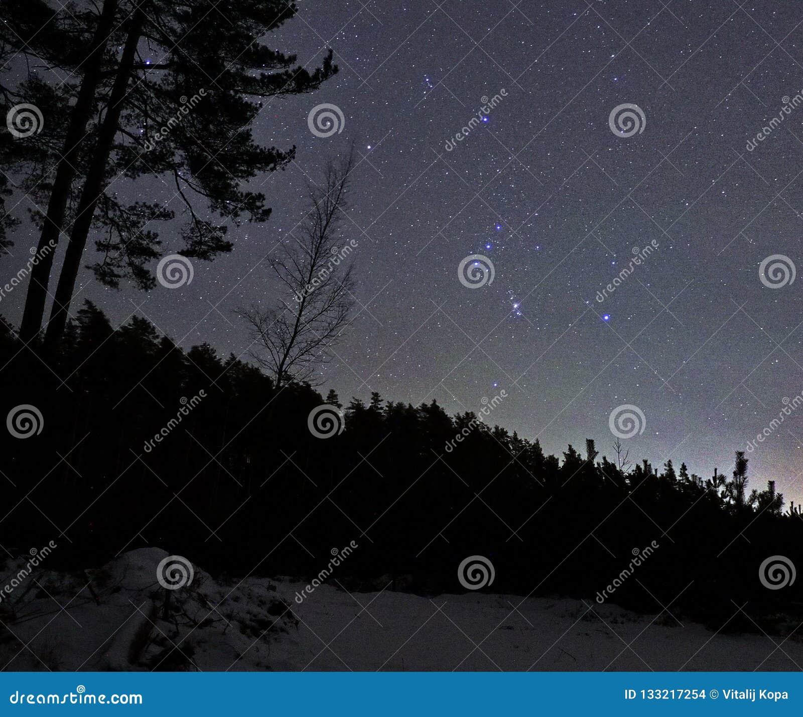 De constellatie van de sterrenorion van de nachthemel over bos