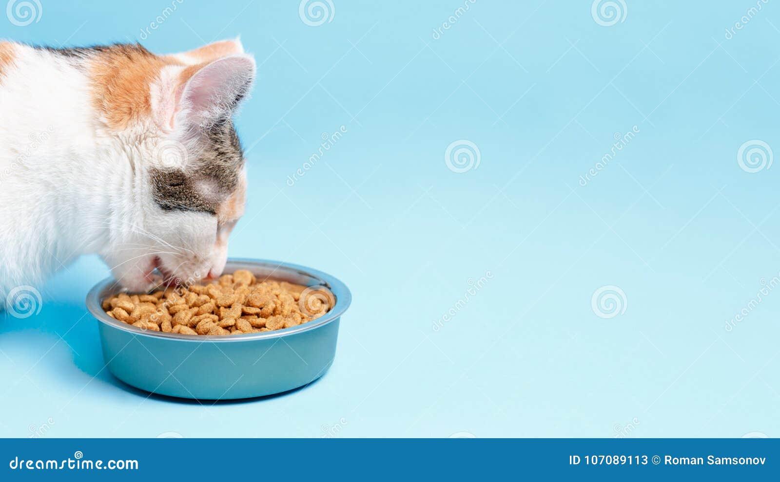 De Cory-kat is smakelijk eet van een plaat op een blauwe backgroun