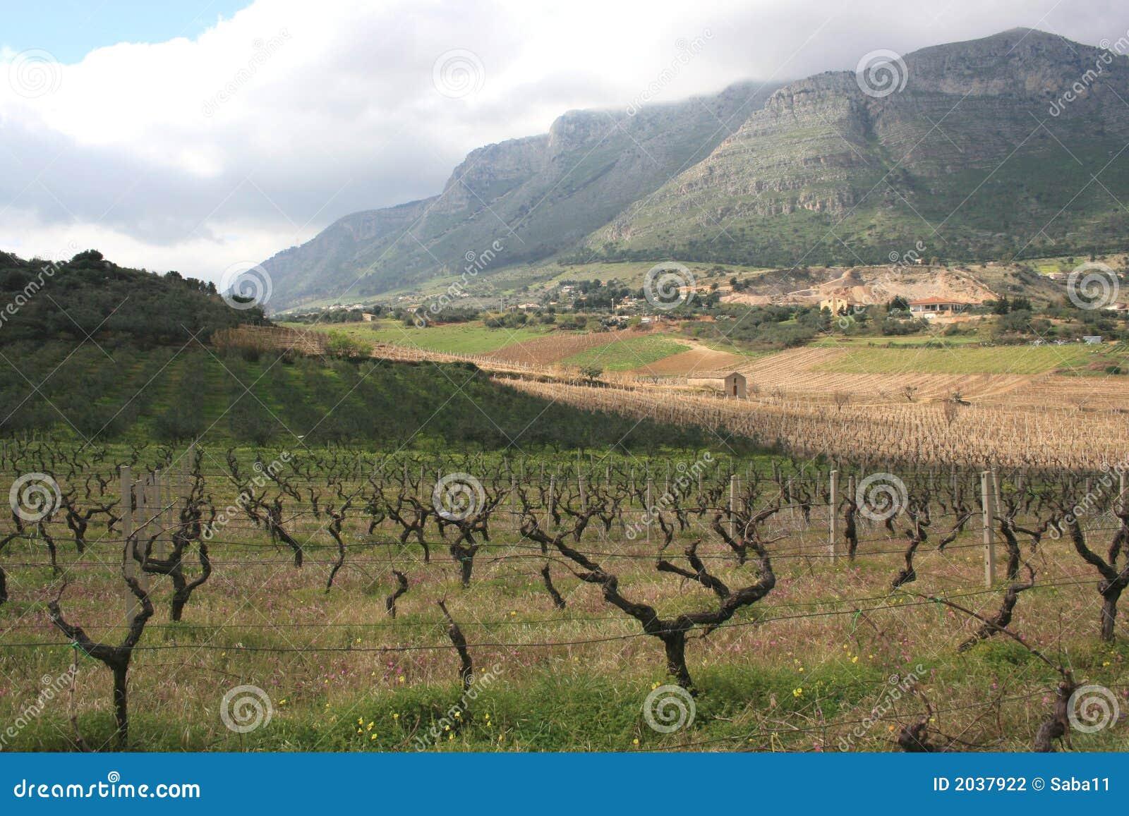 De cultuur van wijngaarden & zet op. Sicilië