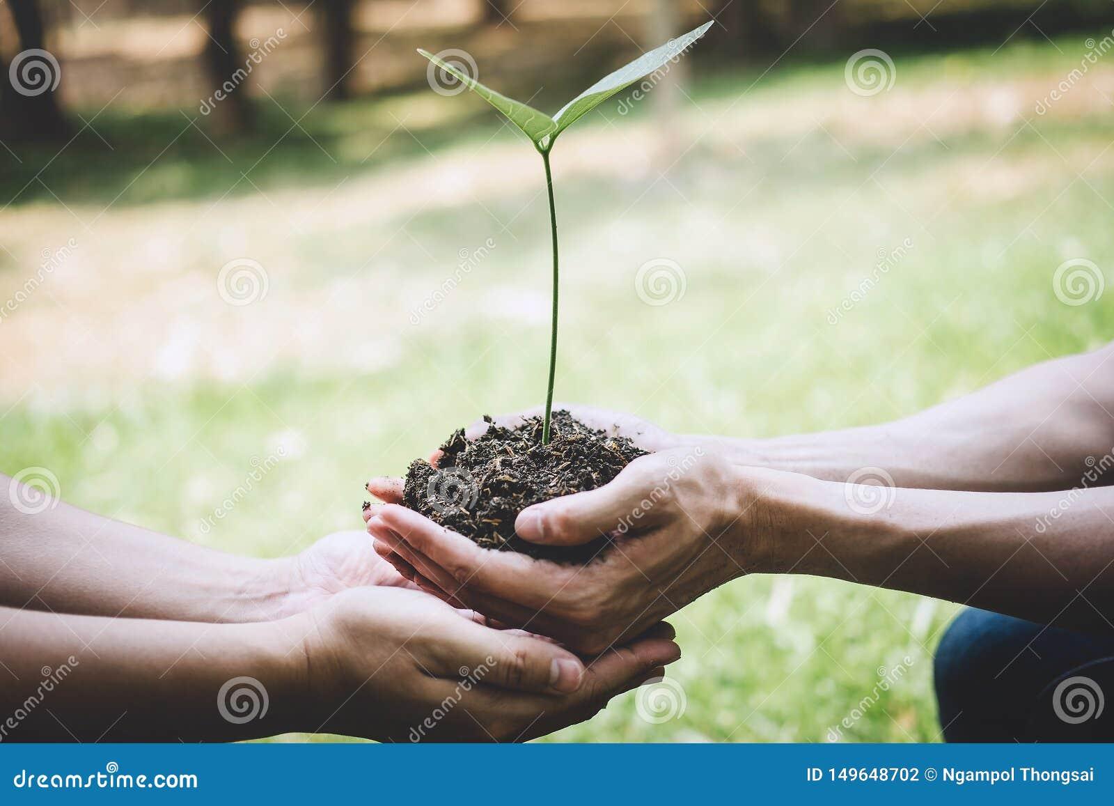 De dag van het wereldmilieu het reforesting, Handen van jonge mens het helpen plantte zaailingen en boom het groeien in grond ter