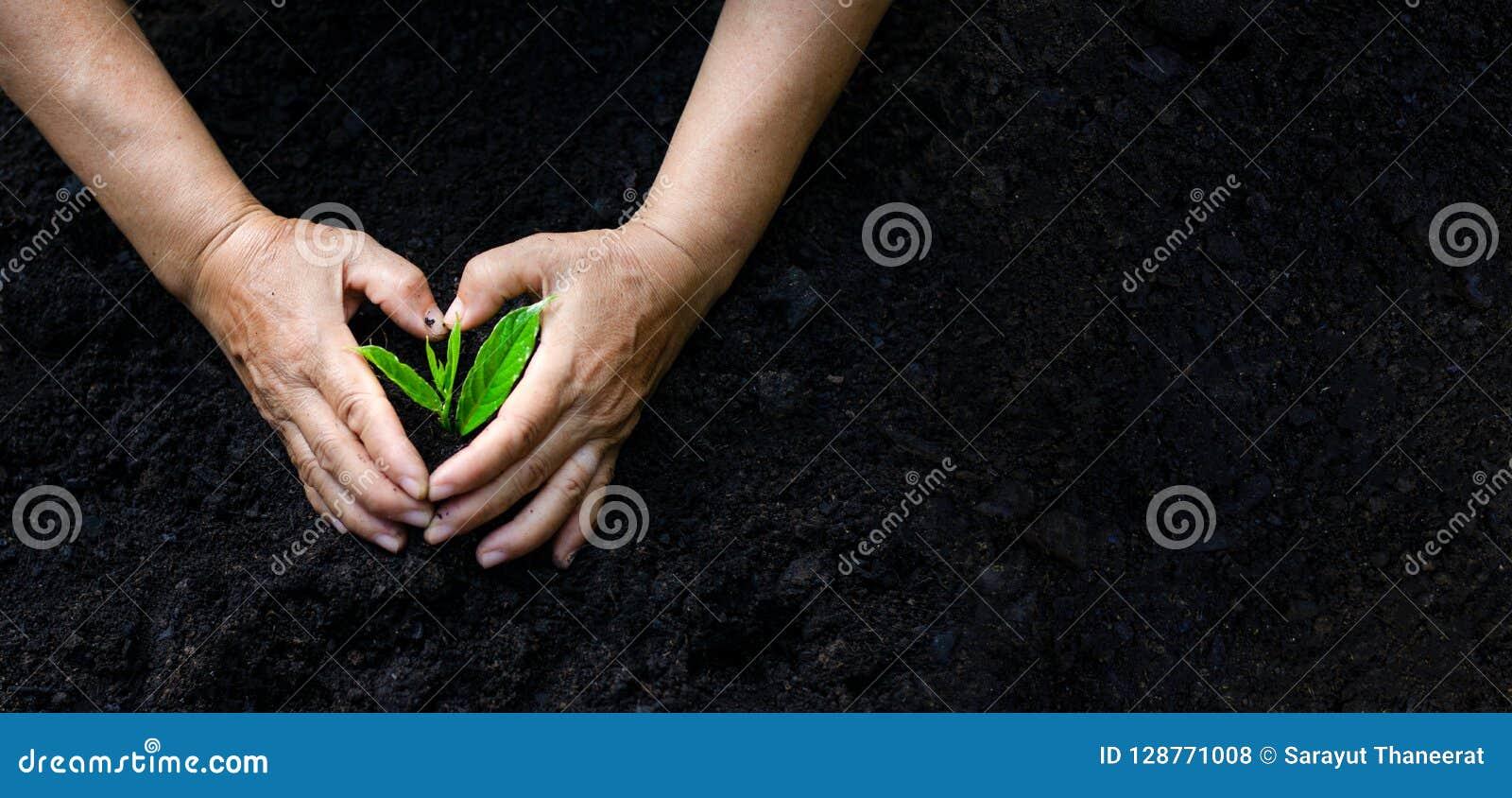 De Dag van de milieuaarde in de handen van bomen die zaailingen kweken Boom Bokeh de groene van de Achtergrond Vrouwelijke handho