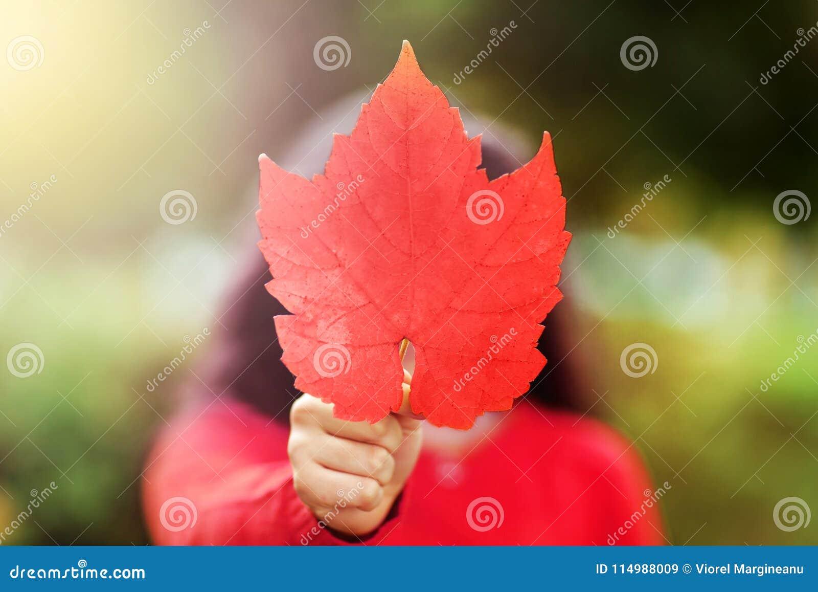 De Dagbeeld van Canada van rood esdoornblad in de hand van meisje jong