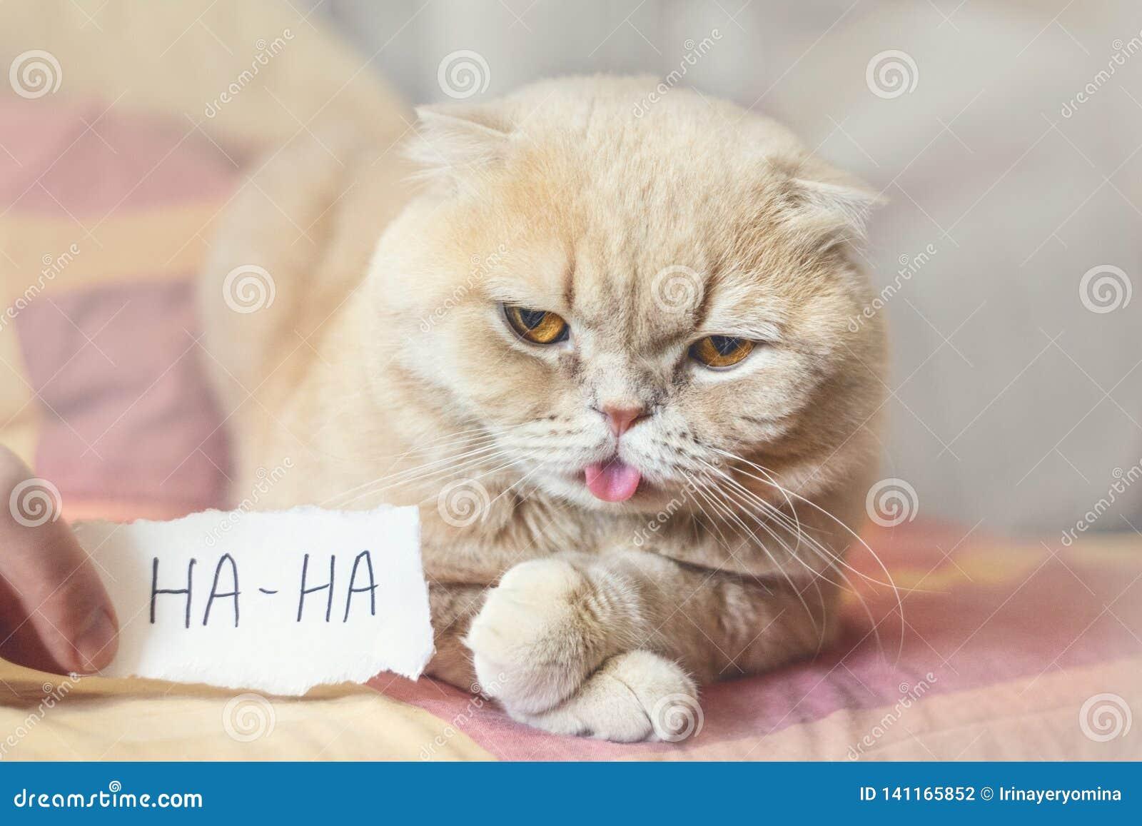 De Dagconcept van April Fools 'met grappig humeurig Schots kat en document blad met HAHA 1 April, Alle Dwazen 'Dag, humeur, stree