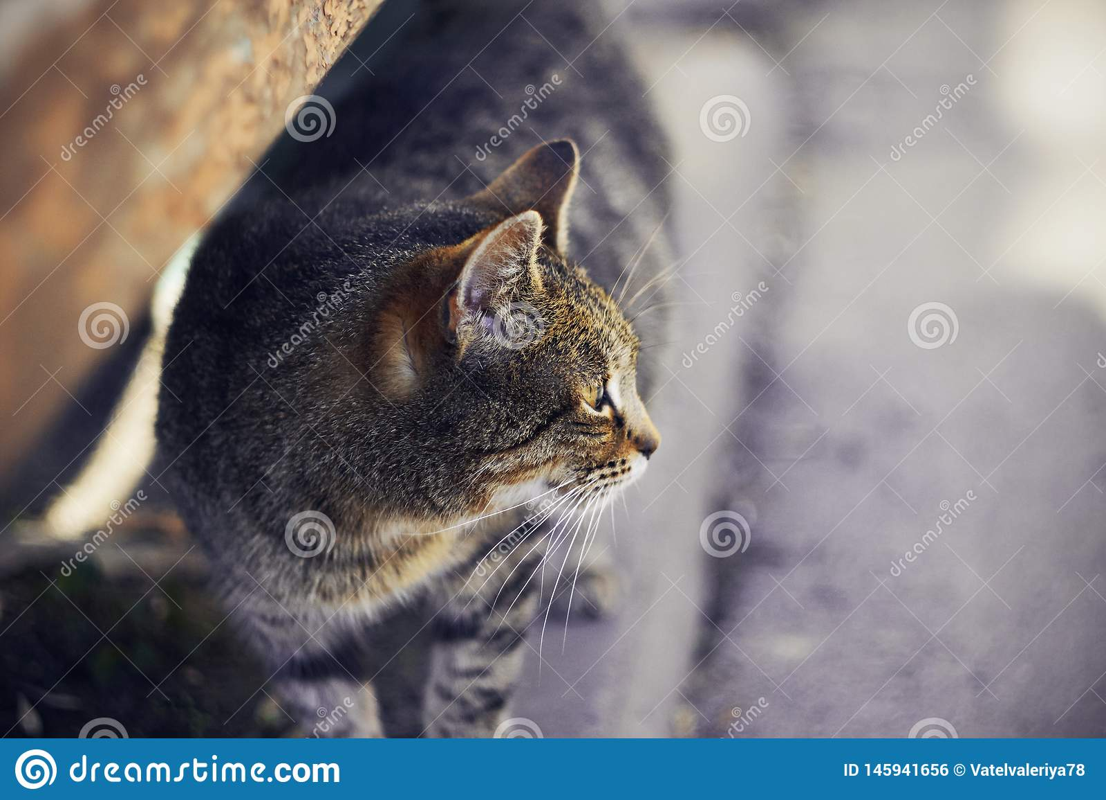 De dakloze gestreepte zwangere kat ziet weg eruit