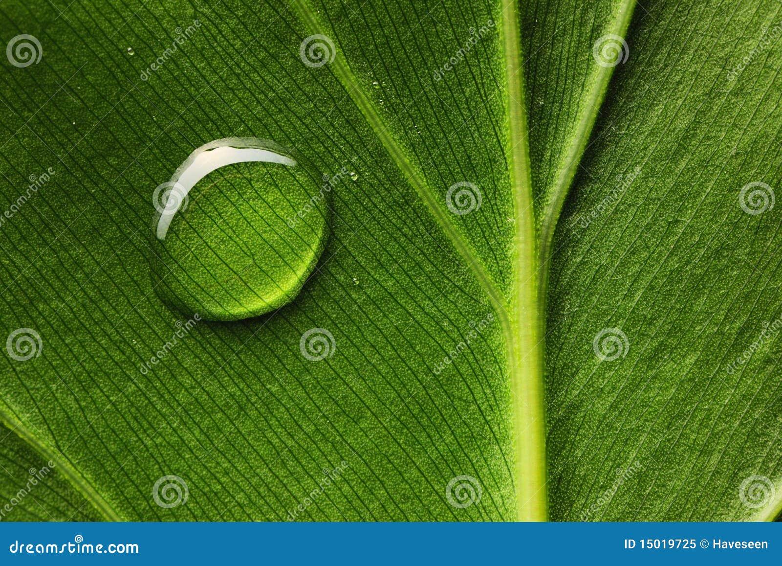 De daling van het water op blad stock afbeelding afbeelding 15019725 - Groen behang van het water ...