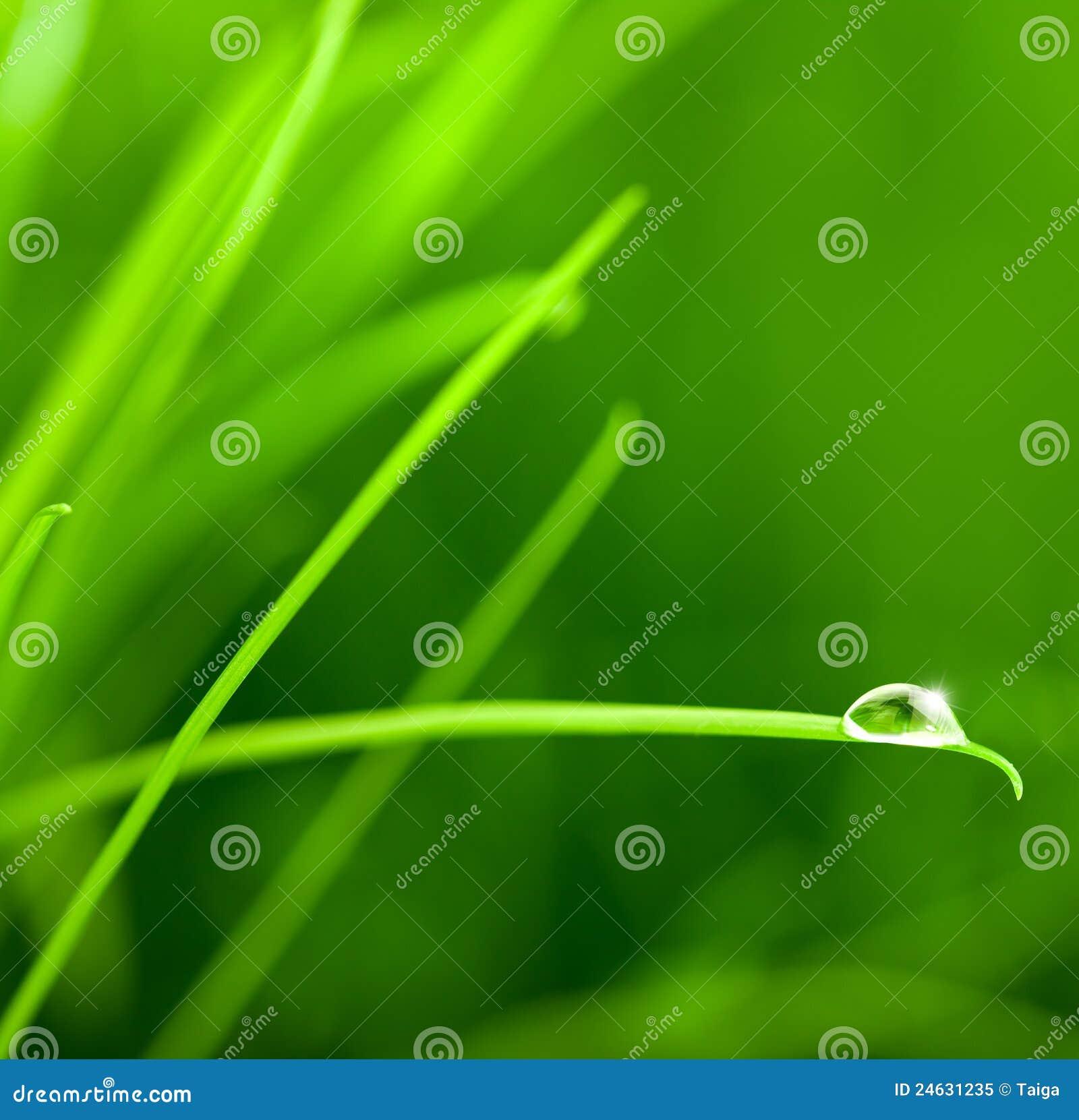 De daling van het water op het blad van het gras met fonkeling royalty vrije stock foto - Groen behang van het water ...