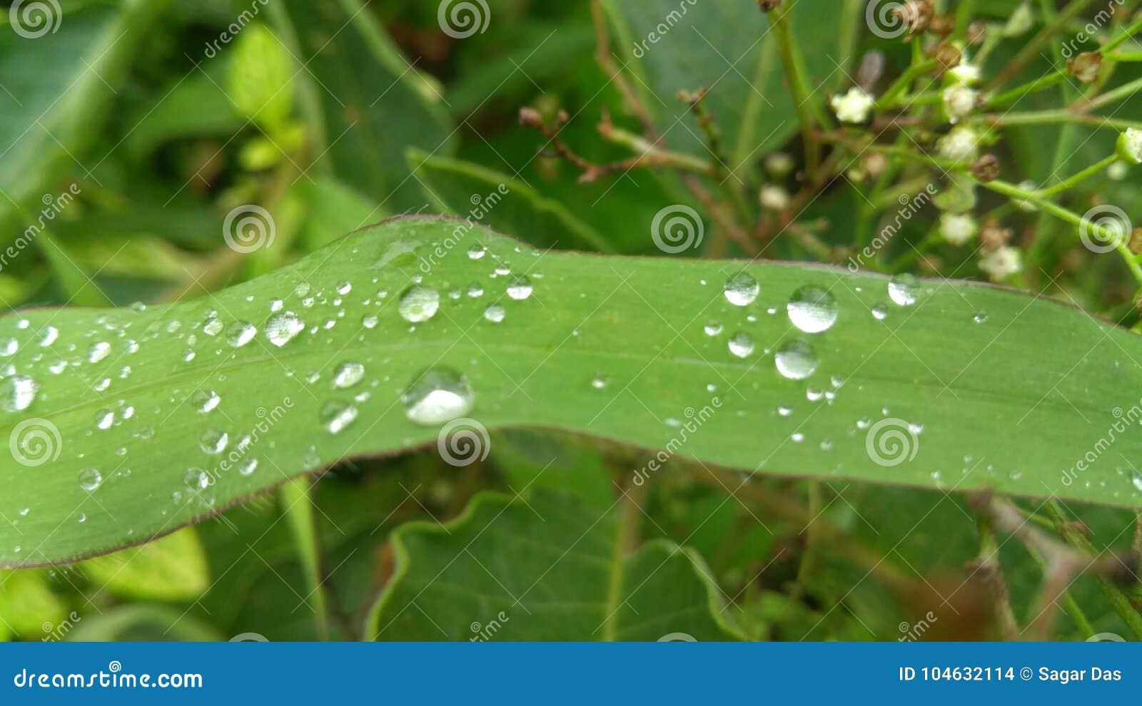 Download De Dalingen Van De Dauw Op Blad Stock Foto - Afbeelding bestaande uit groen, dalingen: 104632114
