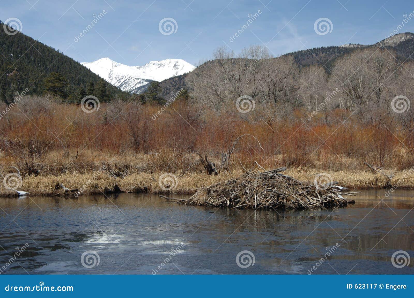 De Dam van de bever in de Lente