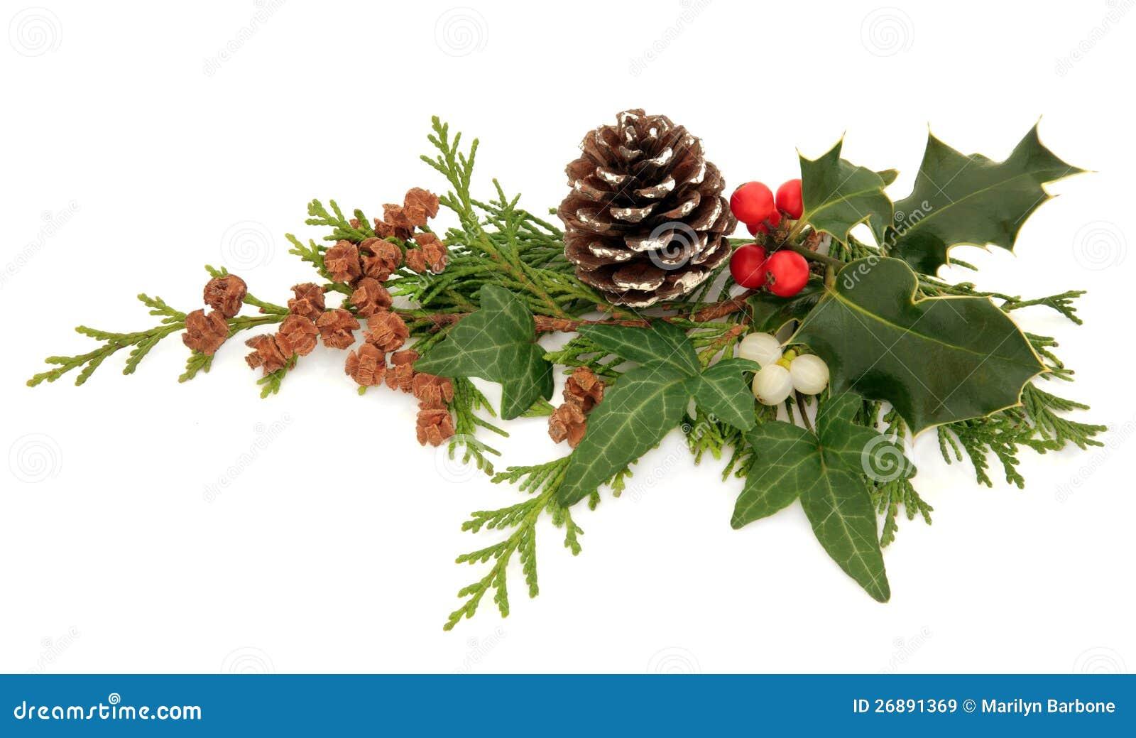 De Decoratie van de Flora van de winter