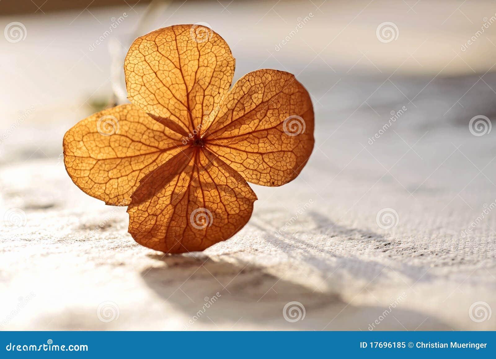 De decoratie van de herfst stock afbeelding afbeelding bestaande uit macro 17696185 - Foto van decoratie ...